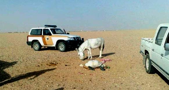 Un Cheik Arabe Tué par l'Âne qu'il Essayait de Sodomiser donkey sodomiser