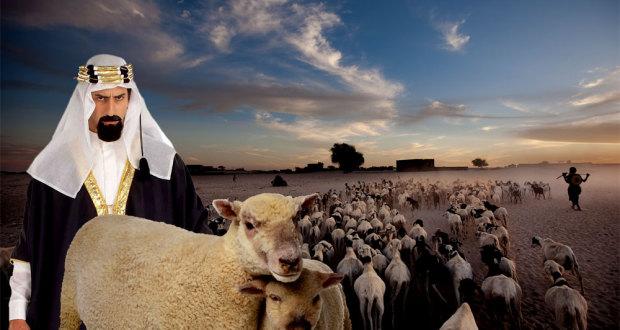 Un Pakistanais est Accusé d'Avoir Violé 30 Moutons serial sheep rapist 620x330
