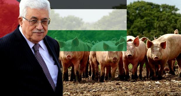 Mahmoud Abbas Affirme que les Israéliens Utilisent des Porcs Sauvages pour Attaquer les Palestiniens abbas pigs 620x330